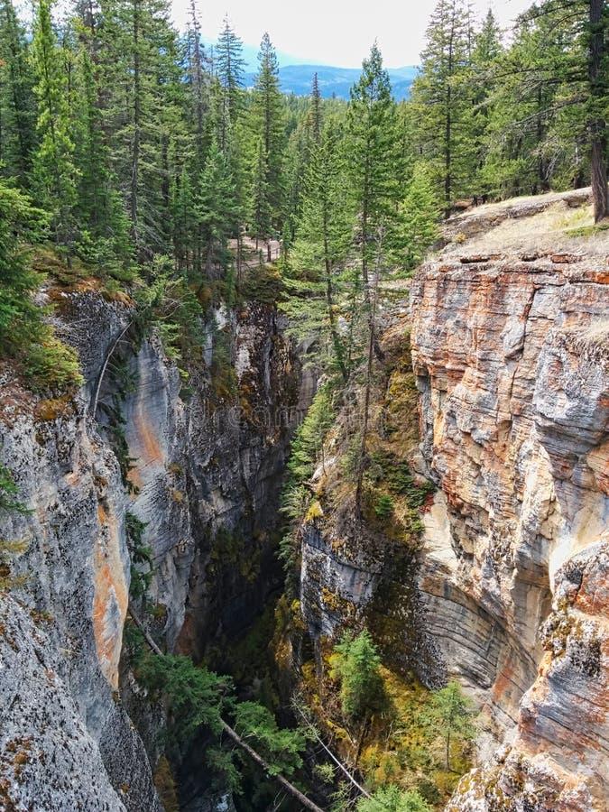 τα δέντρα σε έναν απότομο βράχο μεγαλώνουν στοκ φωτογραφία με δικαίωμα ελεύθερης χρήσης