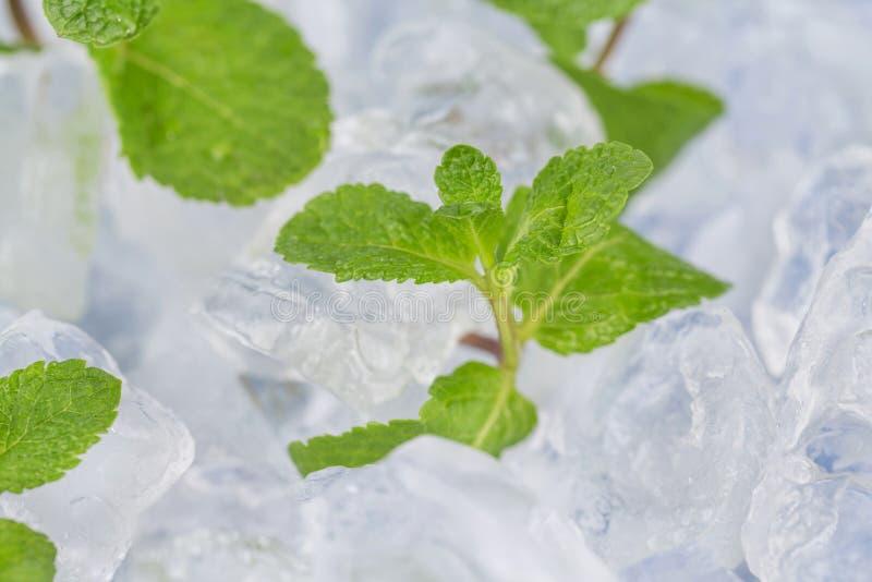 Τα φρέσκα φύλλα μεντών βρίσκονται στους κύβους πάγου προετοιμασία των κοκτέιλ Αγνότητα και φρεσκάδα έννοιας στοκ φωτογραφία με δικαίωμα ελεύθερης χρήσης