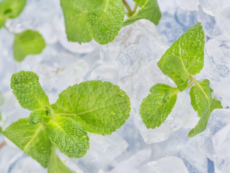 Τα φρέσκα φύλλα μεντών βρίσκονται στους κύβους πάγου προετοιμασία των κοκτέιλ Αγνότητα και φρεσκάδα έννοιας στοκ φωτογραφίες με δικαίωμα ελεύθερης χρήσης