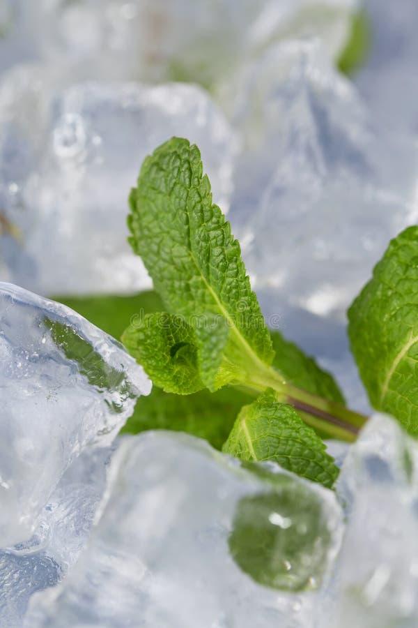 Τα φρέσκα φύλλα μεντών βρίσκονται στους κύβους πάγου προετοιμασία των κοκτέιλ Αγνότητα και φρεσκάδα έννοιας στοκ εικόνα