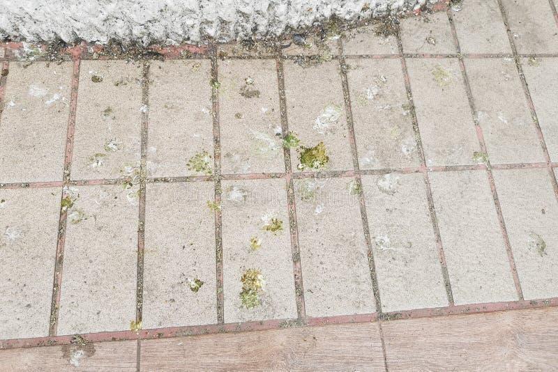 Τα περιττώματα πουλιών που εκκρίνει το ρύπο στο πάτωμα, δημιουργούν το πρόβλημα και την υγιεινή στοκ εικόνες
