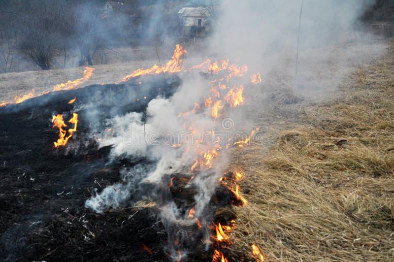 Την άνοιξη, μια ξηρά χλόη καίγεται στοκ φωτογραφίες