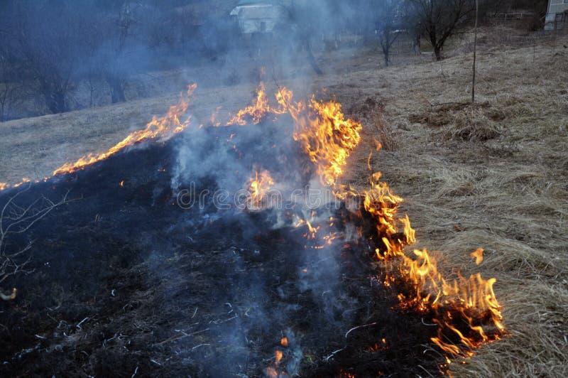 Την άνοιξη, μια ξηρά χλόη καίγεται στοκ φωτογραφία