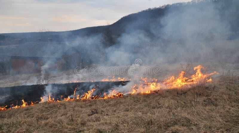 Την άνοιξη, μια ξηρά χλόη καίγεται στοκ εικόνα με δικαίωμα ελεύθερης χρήσης