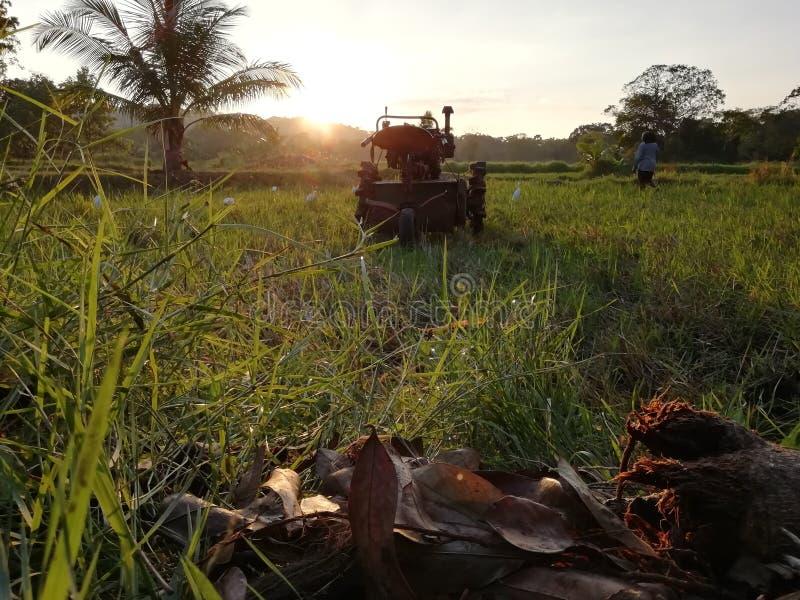 Τομέας ορυζώνα και αγρότης στοκ εικόνες με δικαίωμα ελεύθερης χρήσης