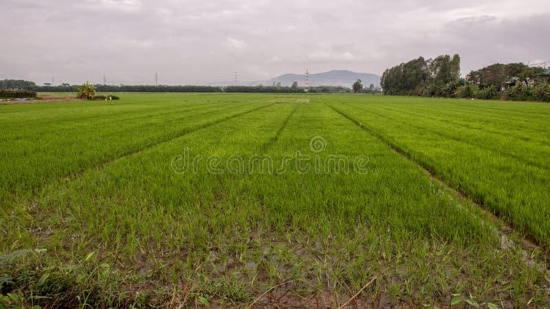 Τομέας ορυζώνα ρυζιού στο χωριό καλλιέργειας Phuong Nam, Vietanm στοκ εικόνες