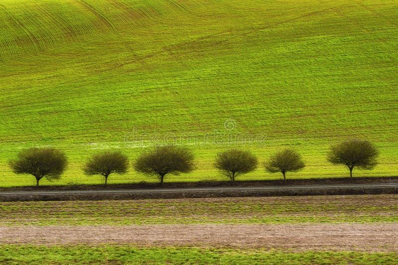 Τομείς γεωργίας γραμμών δέντρων κατά μήκος μιας βουνοπλαγιάς στοκ φωτογραφία με δικαίωμα ελεύθερης χρήσης