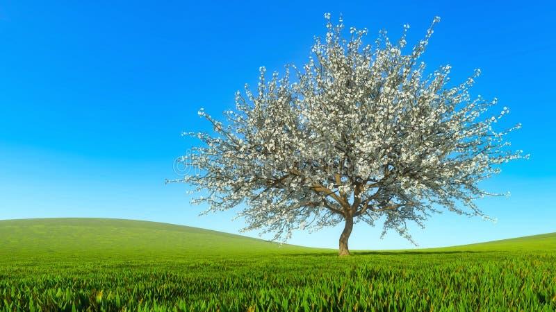 Τοπίο άνοιξη με το ενιαίο ανθίζοντας δέντρο κερασιών στοκ φωτογραφία