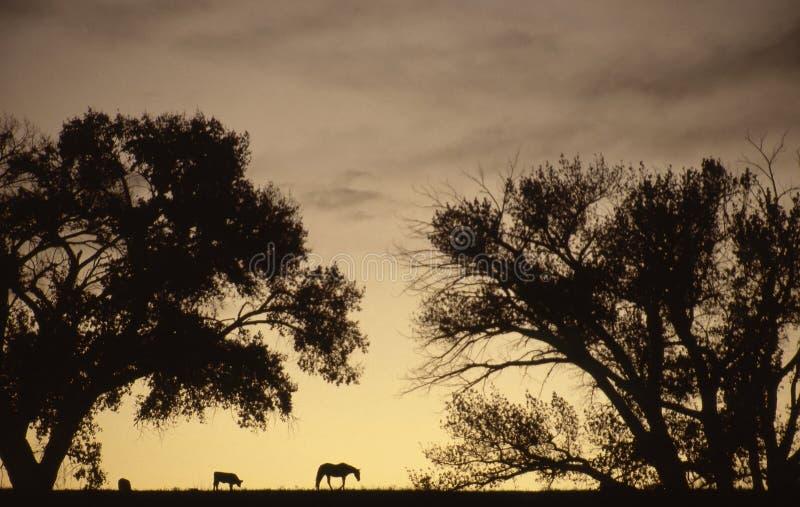 Τοπίο στο ηλιοβασίλεμα με τις αγελάδες και ένα άλογο στη μέση δύση στοκ φωτογραφία με δικαίωμα ελεύθερης χρήσης