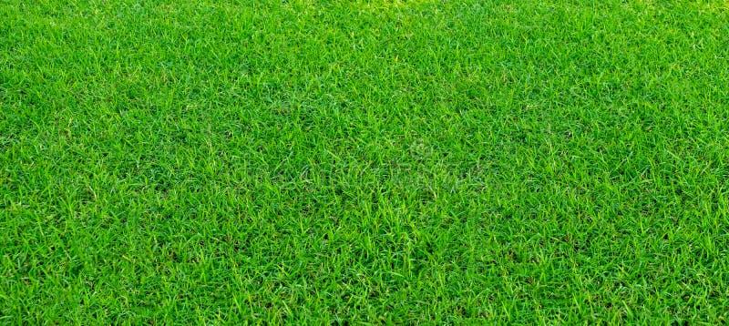 Τοπίο του τομέα χλόης σε πράσινη δημόσια χρήση πάρκων ως φυσικό υπόβαθρο ή σκηνικό Πράσινη σύσταση χλόης από έναν τομέα στάδιο στοκ φωτογραφία με δικαίωμα ελεύθερης χρήσης