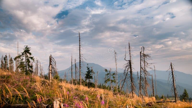 Τοπίο των νεκρών ξύλων στην κλίση των βουνών στοκ φωτογραφίες