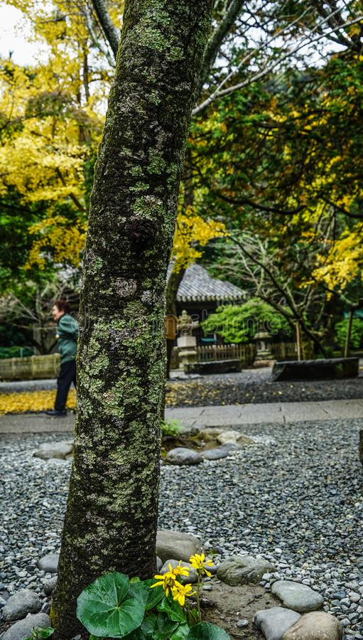 Τοπίο φθινοπώρου του Κιότο, Ιαπωνία στοκ φωτογραφία με δικαίωμα ελεύθερης χρήσης