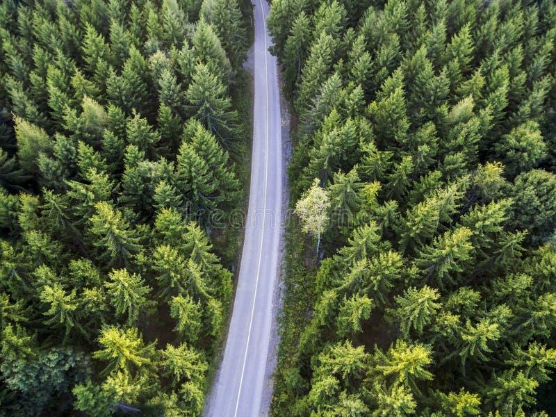 Τοπ άποψη του σκούρο πράσινο δασικού τοπίου το χειμώνα Εναέρια σκηνή φύσης των δέντρων πεύκων και του δρόμου ασφάλτου στοκ εικόνες με δικαίωμα ελεύθερης χρήσης