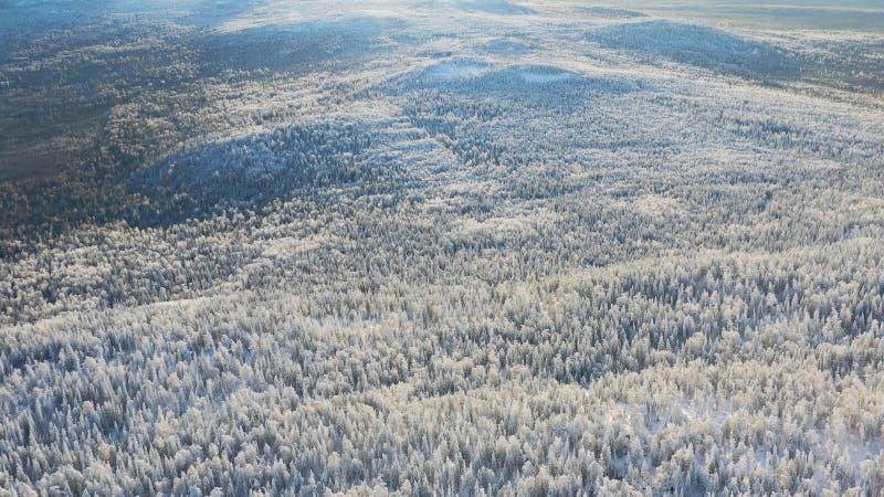 Τοπ άποψη των ορεινών περιοχών με το κωνοφόρο δάσος το χειμώνα footage Όμορφο πανόραμα χιονισμένου πυκνού κωνοφόρου στοκ φωτογραφίες με δικαίωμα ελεύθερης χρήσης