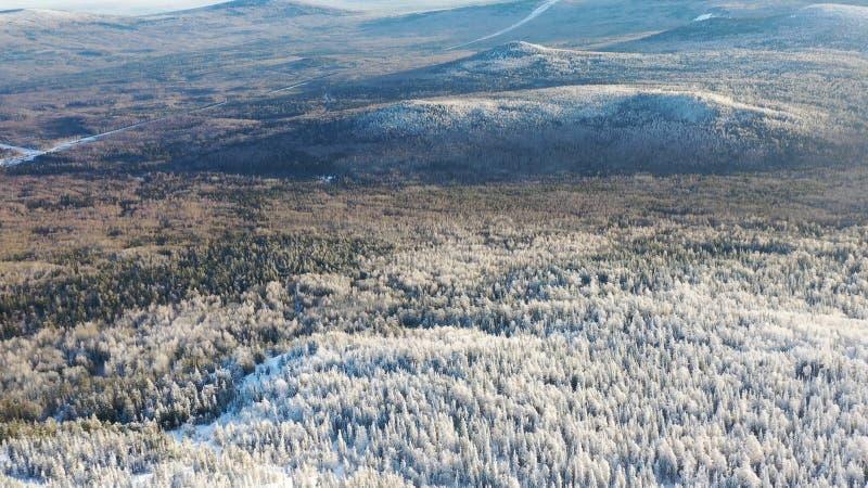 Τοπ άποψη των ορεινών περιοχών με το κωνοφόρο δάσος το χειμώνα footage Όμορφο πανόραμα χιονισμένου πυκνού κωνοφόρου στοκ εικόνες