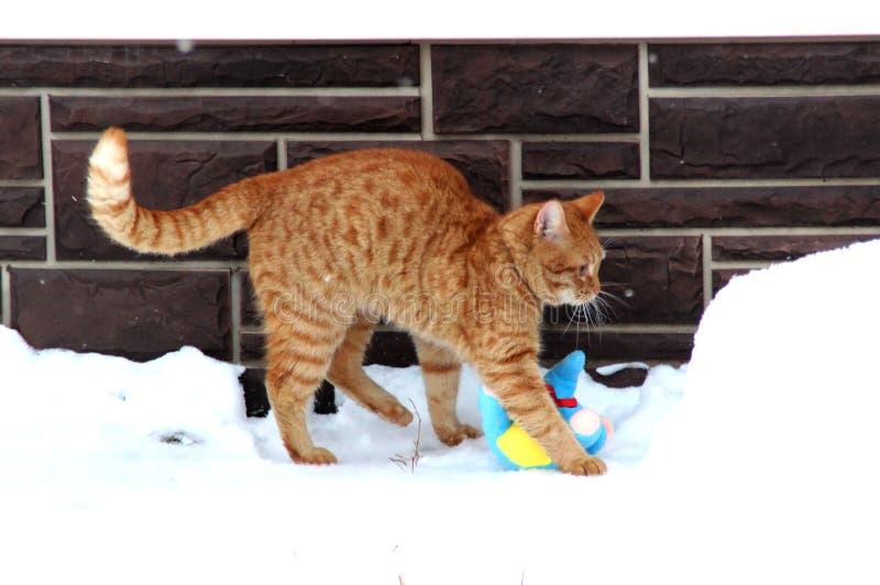Το γατάκι πιπεροριζών είναι snowdrift στοκ εικόνα με δικαίωμα ελεύθερης χρήσης