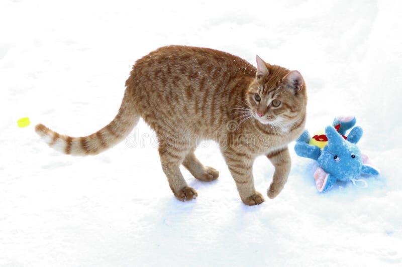 Το γατάκι πιπεροριζών θέλει να παίξει με ένα παιχνίδι βελούδου στοκ φωτογραφία με δικαίωμα ελεύθερης χρήσης