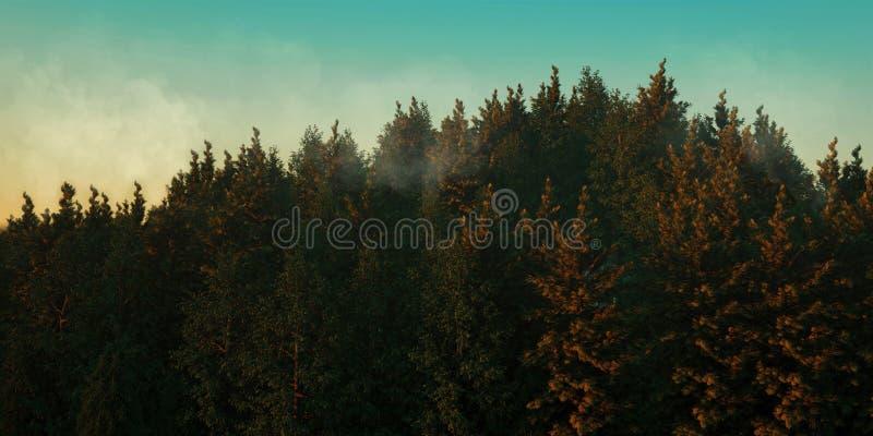 Το ηλιοβασίλεμα καθιστά δασικός διανυσματική απεικόνιση