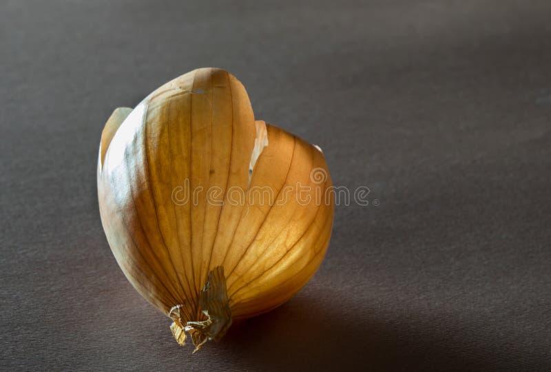 Το κοχύλι, φλοιός του κίτρινου κρεμμυδιού σε ένα σκοτεινό υπόβαθρο στοκ εικόνα
