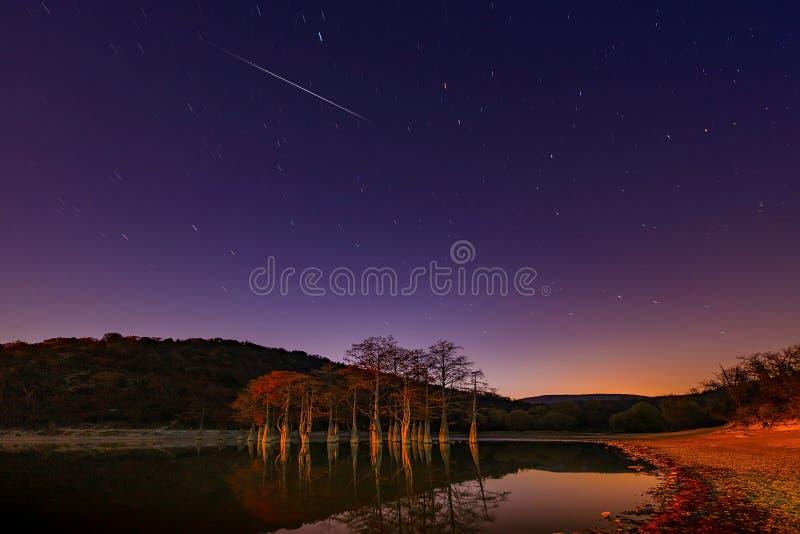 Το κόκκινο αφήνει το φθινόπωρο στους κλάδους των δέντρων κυπαρισσιών ελών στο νερό μιας λίμνης βουνών την κοιλάδα Sukko στοκ εικόνες