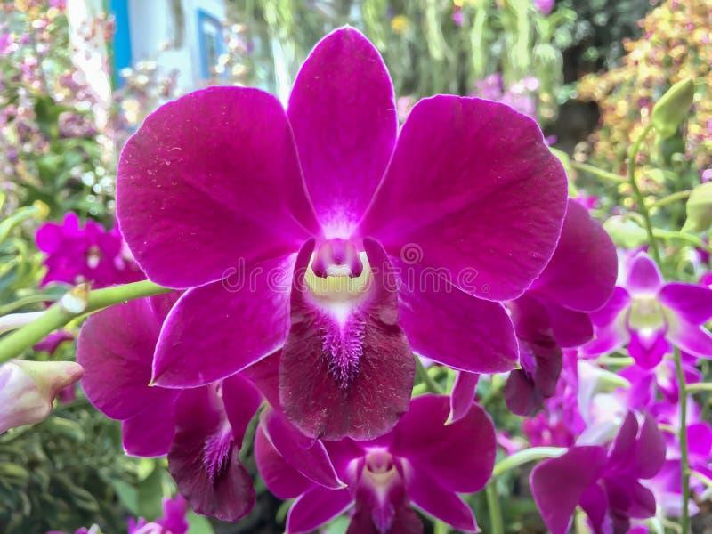 το λουλούδι ανθίζει orchid orchids & στοκ φωτογραφία