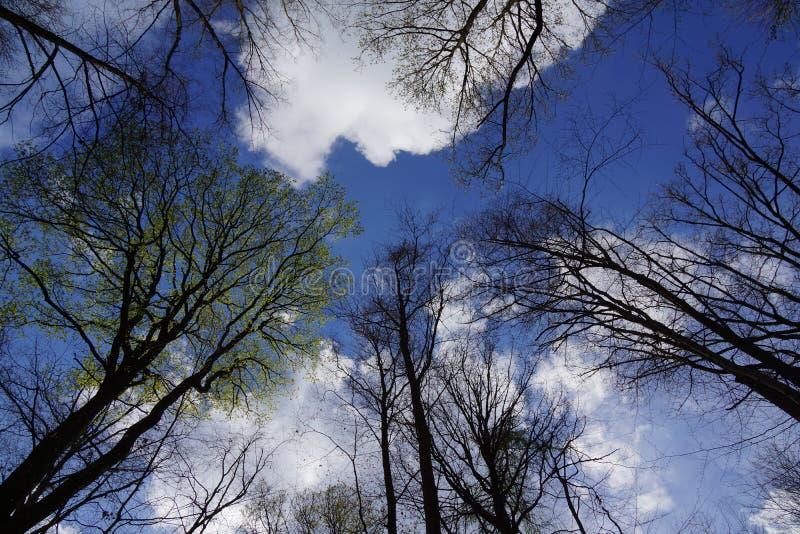 Το μαύρο άσπρο μπλε εξετάζει τον ουρανό στοκ φωτογραφία με δικαίωμα ελεύθερης χρήσης