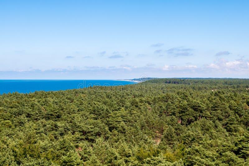Το δάσος βλέπει το καλοκαίρι στη μεσημβρία στοκ φωτογραφίες