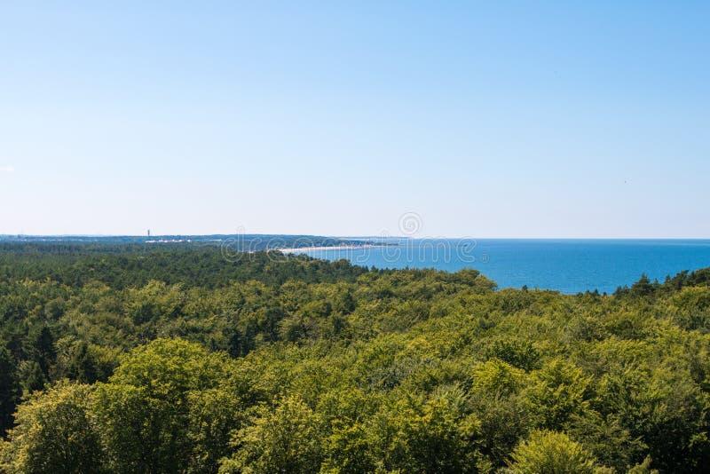 Το δάσος βλέπει το καλοκαίρι στη μεσημβρία στοκ εικόνες
