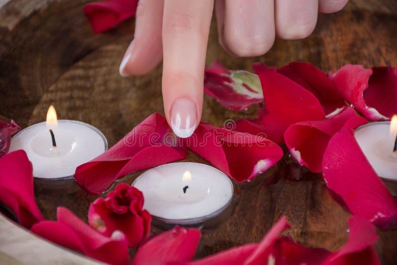 Το δάχτυλο κοριτσιών με το γαλλικό κερί αφής ύφους στιλβωτικής ουσίας καρφιών στο κύπελλο με το νερό και κόκκινος αυξήθηκε πέταλα στοκ φωτογραφία με δικαίωμα ελεύθερης χρήσης