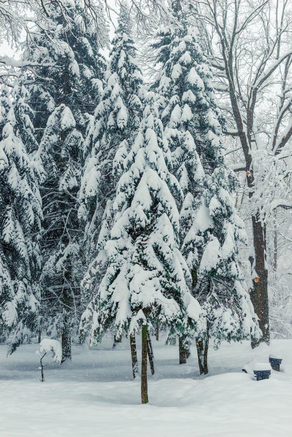 το όμορφο μαγικό δάσος μετά από χιονοπτώσεις στη χειμερινή ημέρα έφαγε στοκ εικόνες