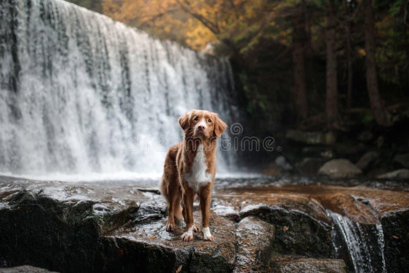 Το σκυλί στον καταρράκτη Pet στη φύση σπίτι έξω σκυλί λίγος ποταμός σχεδιαγράμματος στοκ εικόνα