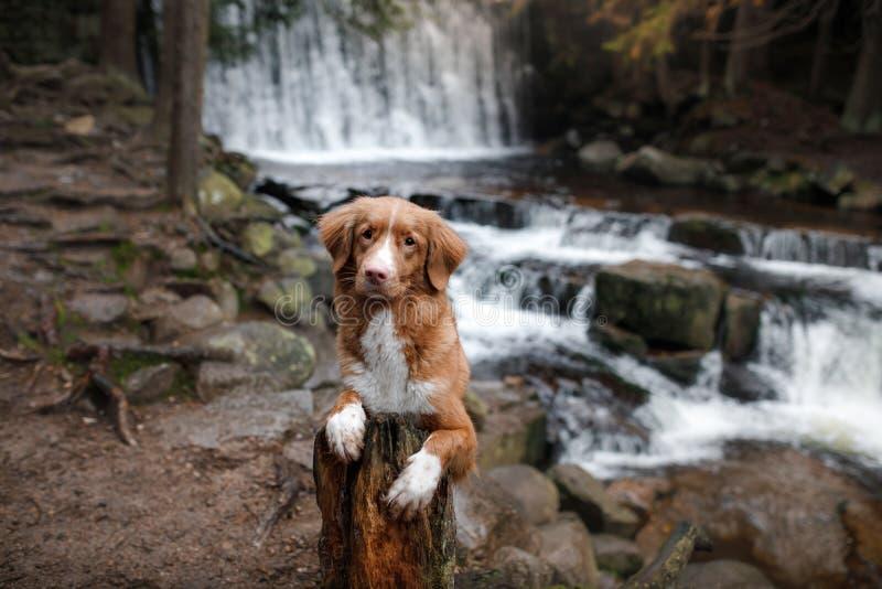 Το σκυλί στον καταρράκτη Pet στη φύση σπίτι έξω σκυλί λίγος ποταμός σχεδιαγράμματος στοκ εικόνες