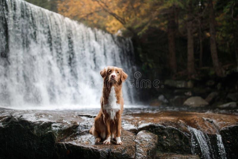 Το σκυλί στον καταρράκτη Pet στη φύση σπίτι έξω σκυλί λίγος ποταμός σχεδιαγράμματος στοκ φωτογραφία με δικαίωμα ελεύθερης χρήσης