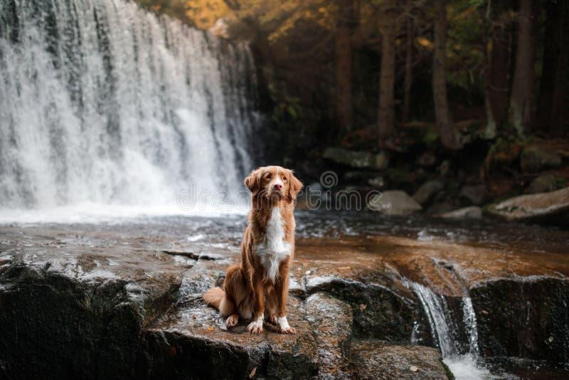 Το σκυλί στον καταρράκτη Pet στη φύση σπίτι έξω σκυλί λίγος ποταμός σχεδιαγράμματος στοκ φωτογραφία