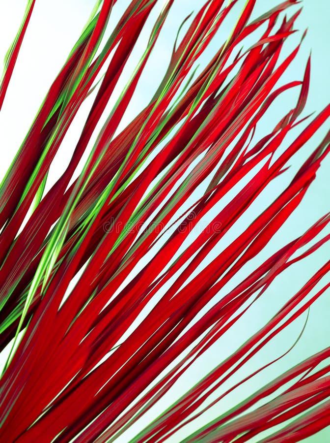Το τροπικό ξηρό ρόδινο πράσινο κόκκινο κλάδων αφήνει στο υπόβαθρο το αφηρημένο ζιζάνιο χλόης φοινικών χλοώδες στοκ φωτογραφίες