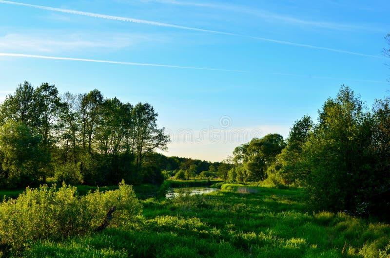 Το πανοραμικό υπόβαθρο του φυσικού τοπίου ήλιων πρωινού αντιπροσωπεύει ένα όμορφο οικολογικό σύστημα στοκ εικόνες