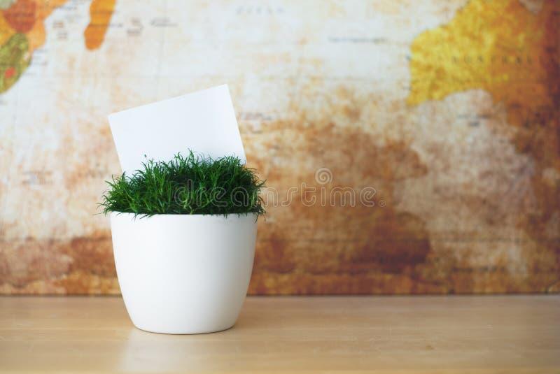 Το πράσινο λουλούδι στο άσπρο δοχείο με το άσπρο μικρό έγγραφο ως θέση για το κείμενό σας στοκ εικόνες με δικαίωμα ελεύθερης χρήσης