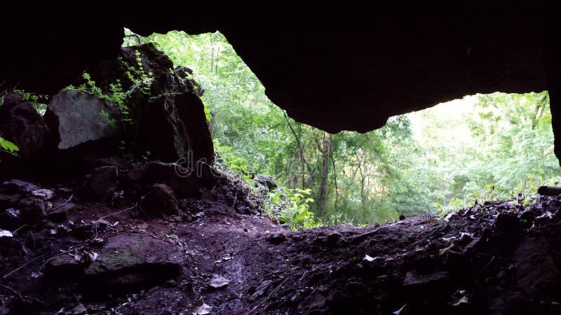 Το πράσινο δάσος κρύβεται ακριβώς πέρα από τις σκιές στοκ εικόνα με δικαίωμα ελεύθερης χρήσης