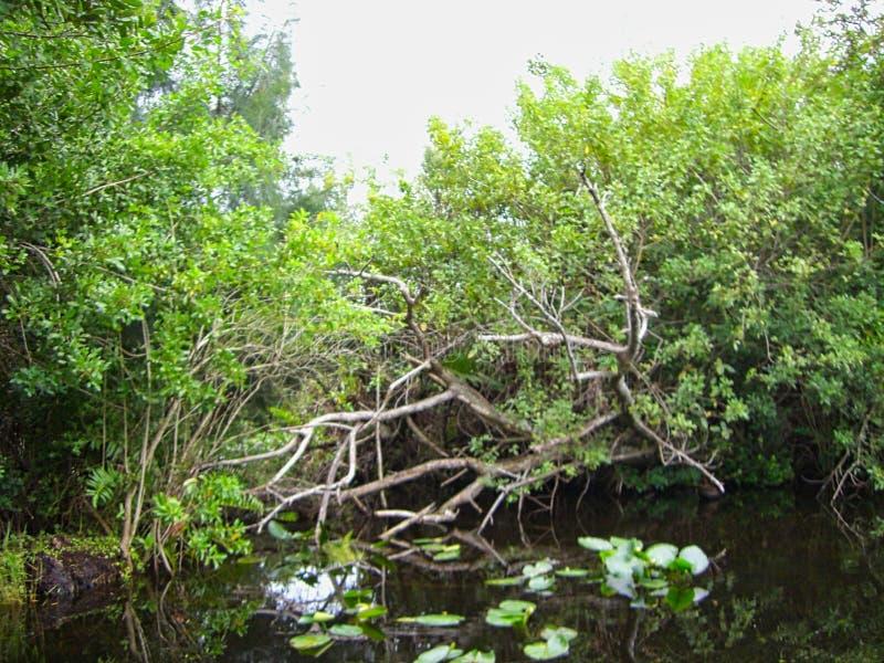 Το Everglades στη Φλώριδα στοκ φωτογραφίες