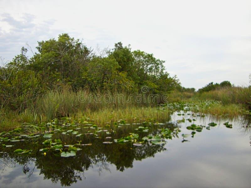 Το Everglades στη Φλώριδα στοκ φωτογραφίες με δικαίωμα ελεύθερης χρήσης