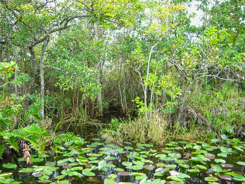 Το Everglades στη Φλώριδα στοκ φωτογραφία