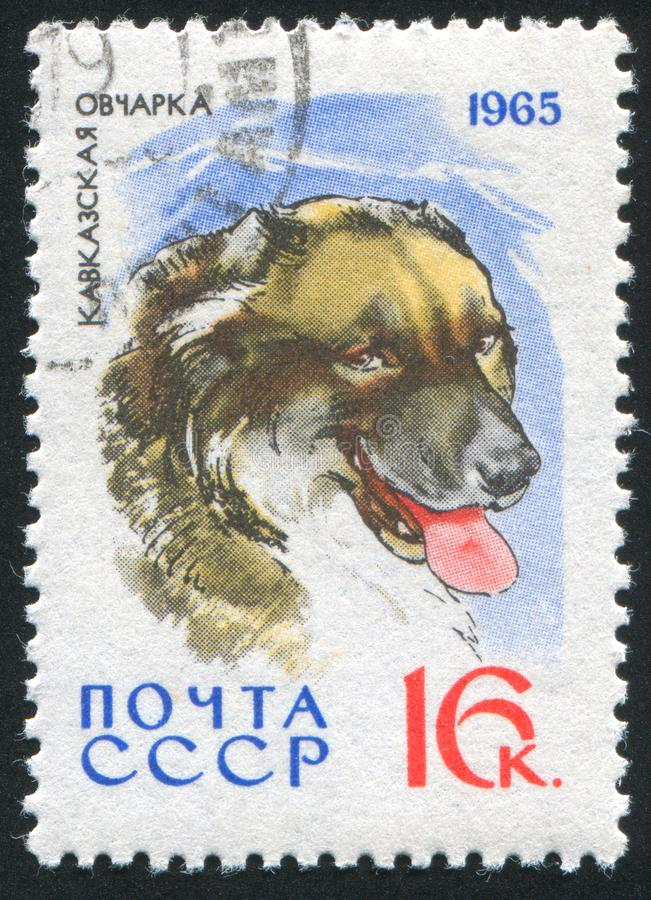τσοπανόσκυλο στοκ εικόνα με δικαίωμα ελεύθερης χρήσης