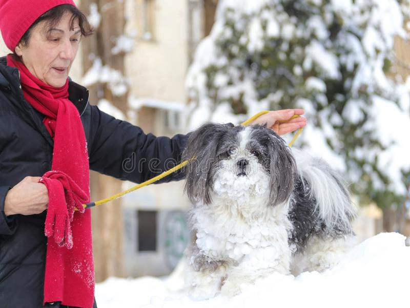Φιλία μεταξύ της ηλικιωμένης γυναίκας και ενός σκυλιού tzu shih το χειμώνα στοκ φωτογραφία