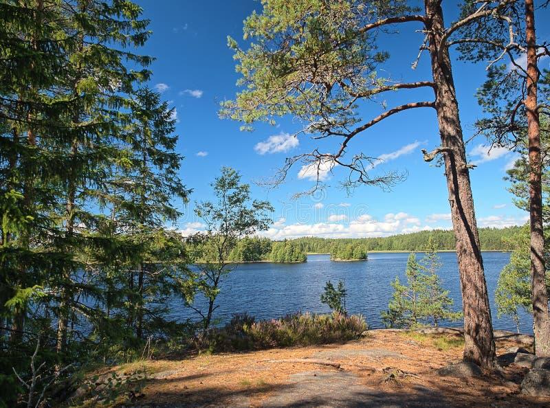 Φινλανδική σκηνή θερινών λιμνών στοκ φωτογραφία
