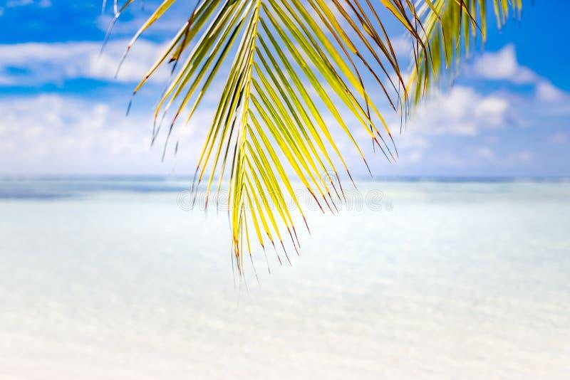 φοίνικας φύλλων παραλιών τ Εμπνευσμένο τοπίο παραλιών, τροπικές ταξίδι και έννοια θερινών διακοπών στοκ φωτογραφία με δικαίωμα ελεύθερης χρήσης