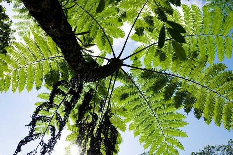 Φοίνικες που βλέπουν πράσινοι από την προοπτική βατράχων στοκ φωτογραφία με δικαίωμα ελεύθερης χρήσης