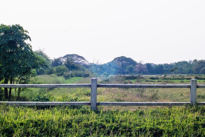 Φράκτης κάουμποϋ ενάντια στο δασικό τέλειο καλοκαίρι άνοιξης φύσης τομέων στοκ εικόνα