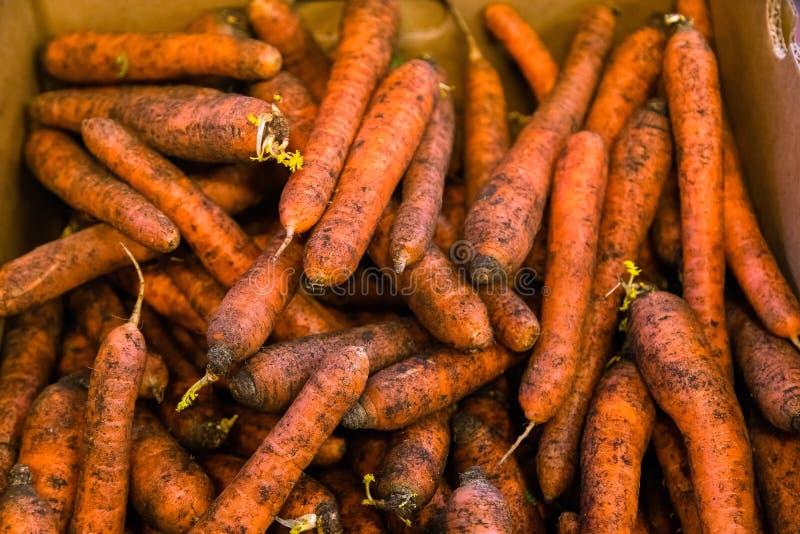 Φρέσκα, γλυκά, ακατέργαστα καρότα για την πώληση στην αγορά φρούτων και λαχανικών Σύσταση καρότων με το υπόβαθρο ρύπου στοκ φωτογραφίες