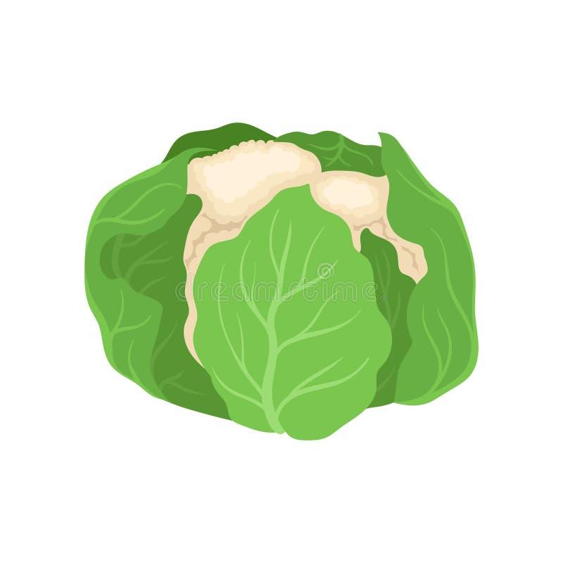 Φρέσκες κουνουπίδι και οργανική τροφή Έννοια χορτοφαγίας απεικόνιση αποθεμάτων