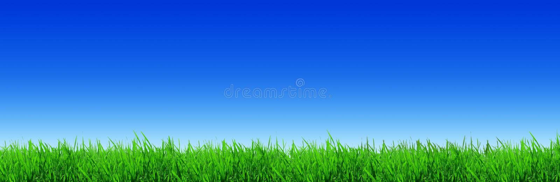 Φρέσκες πράσινες λεπίδες της χλόης που φωτίζονται από τον ήλιο στοκ εικόνα